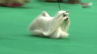 Birmingham National Dog Show 2016  Toy group Shortlist