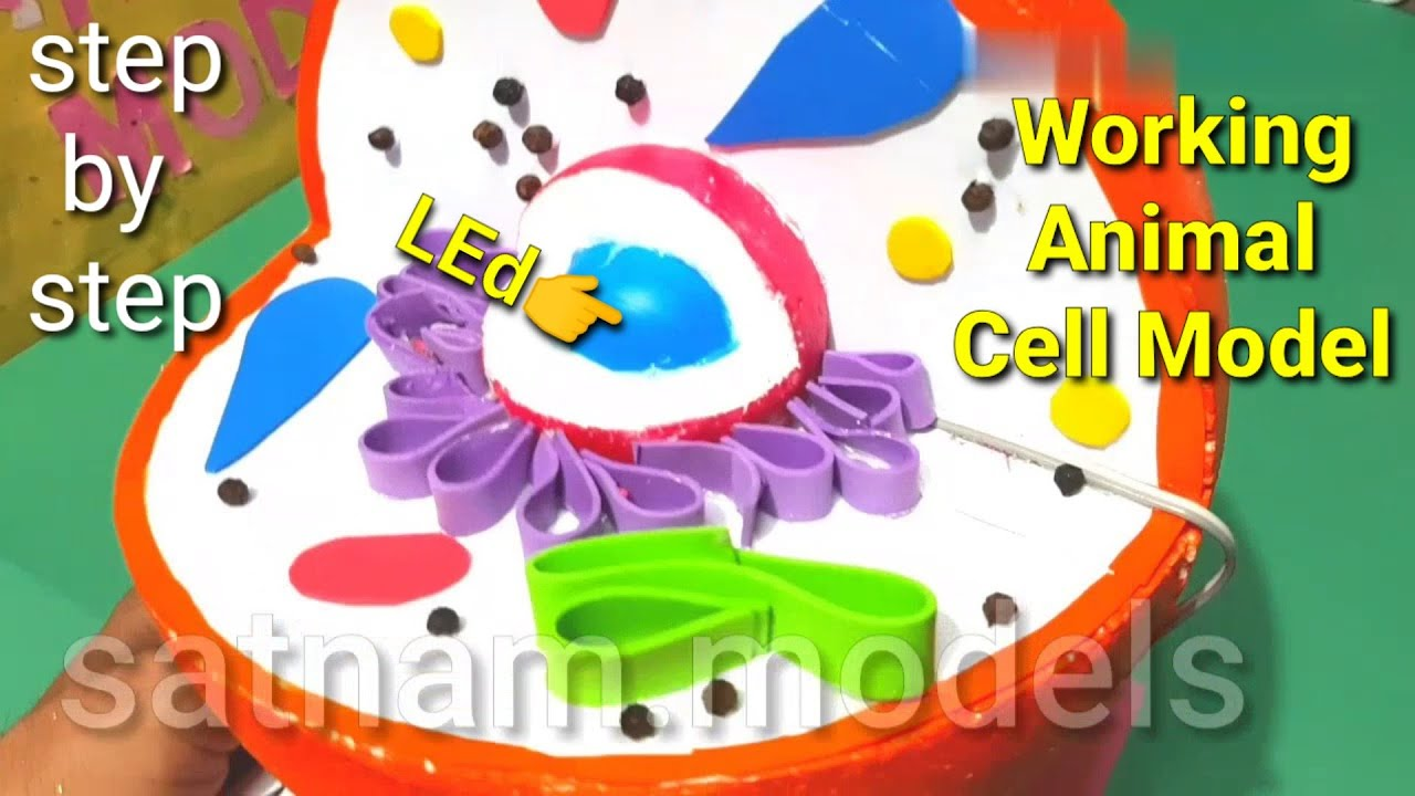 Animal Cell Model 3d Animal Call Project Youtube