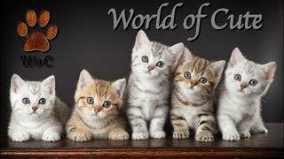 Смешные Коты 2019 Кошки 2019 Приколы Funny Cats #22 Котята lol cube Woc