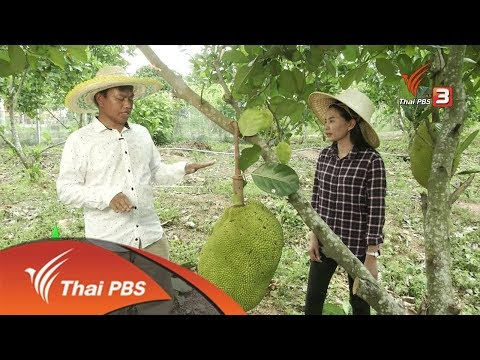 ทำเกษตรผสมผสานรายได้ดี จ.ชลบุุรี : ชุมชนทั่วไทย (25 มี.ค. 62)