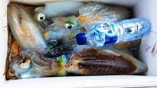 SERU DAN ASYIK MANCING CUMI CUMI BESAR di RUMPON squid fishing