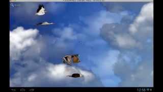 Birds Free Live Wallpaper