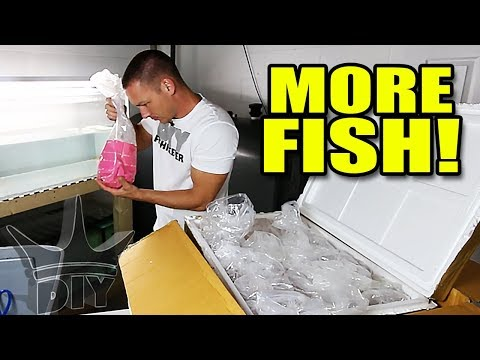 UNBOXING MY SECRET FISH