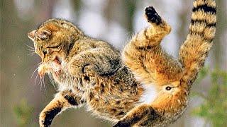 Подборка падающих котов. Прикольно / Funny falling cats, Hilarious