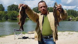 Рыбалка на карпа, лето 2019  Сибиряк на Урале.