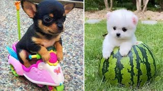 Baby Dogs  Cute and Funny Dog Videos Compilation #5   Funny Puppy Videos 2020