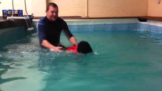 Flynn The Cocker Spaniel X Poodle Tries Canine Hydrotherapy.