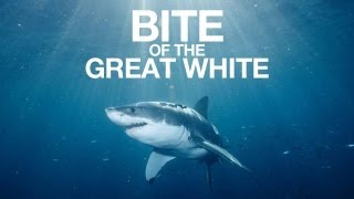 bite of the great white shark week remix