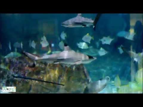 Blacktip Reef Shark Marine Aquarium