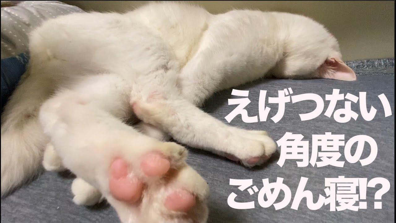 1000の寝相を持つ猫、隙あらば顔面がめり込む My spacecat sleeps lying face down
