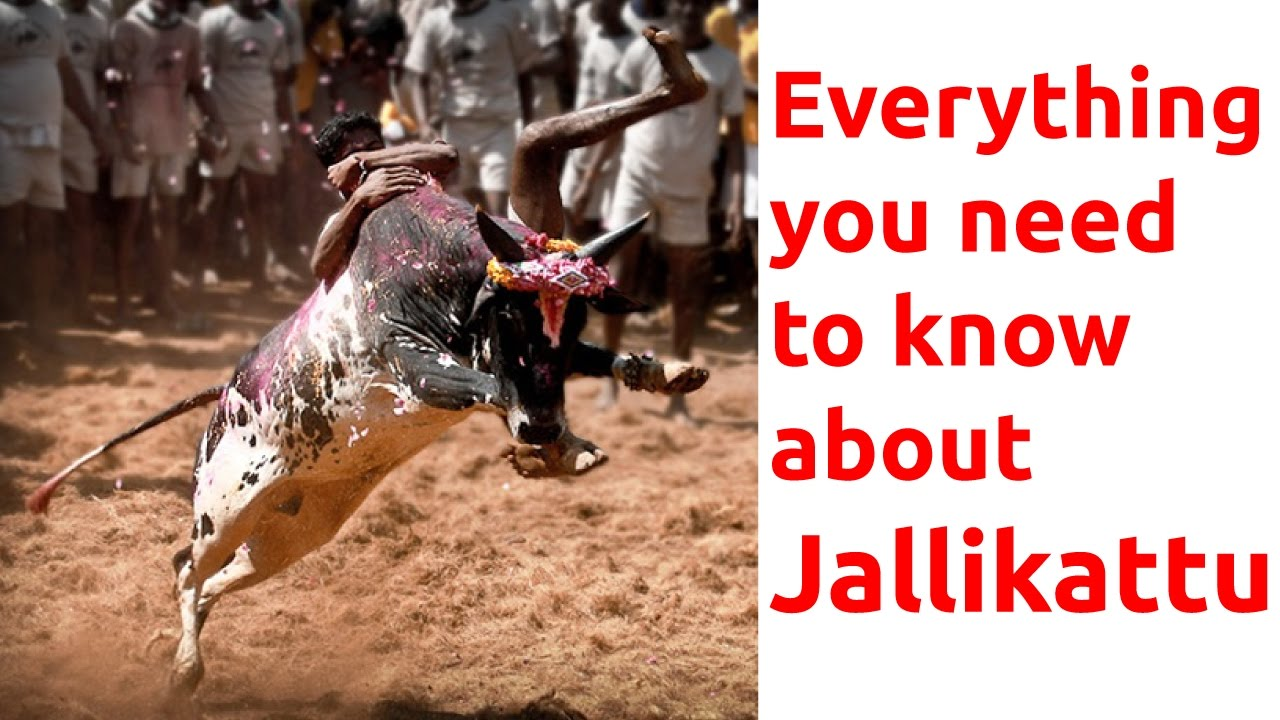Everything You Need To Know About Jallikattu Helpful For Mba Ssc Upsc And Other Competitive