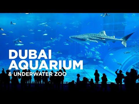 Dubai Aquarium and Underwater Zoo at The Dubai Mall   Dubai City
