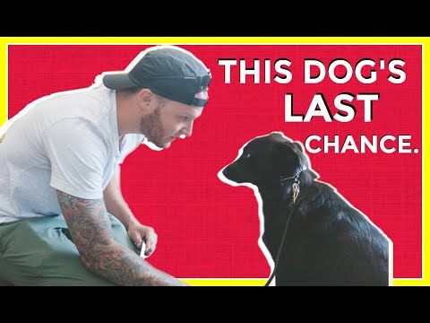 Dog Reactivity Training  purely positive vs balanced Training