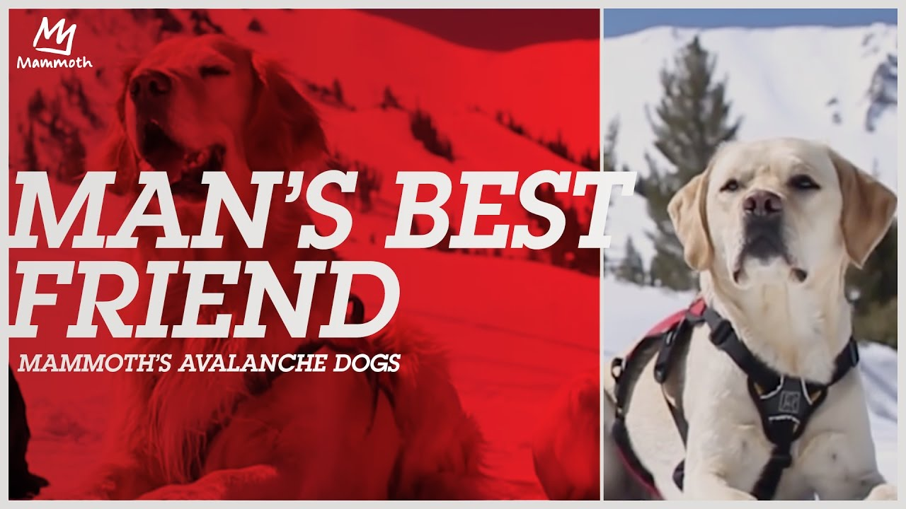 5148d59ea983 Mammoth Avalanche Dogs  MammothStories · Mammoth Mountain