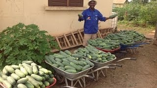 Food For Life: Republic of Congo Project