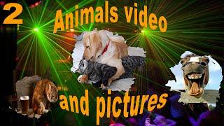 Собаки танцуют. Смешное видео.