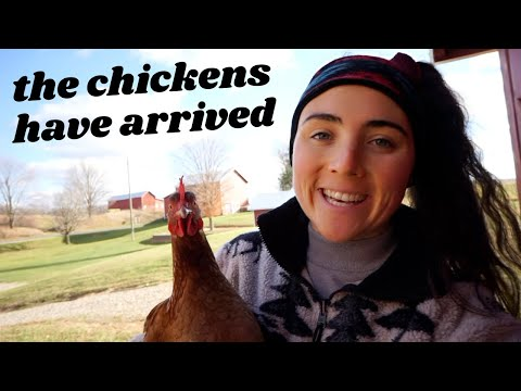 We now have 8 chickens and here are their names