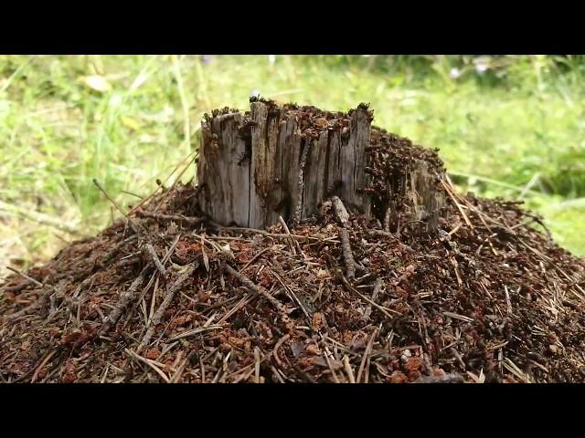 Mit tanulhat az ember a hangyáktól?