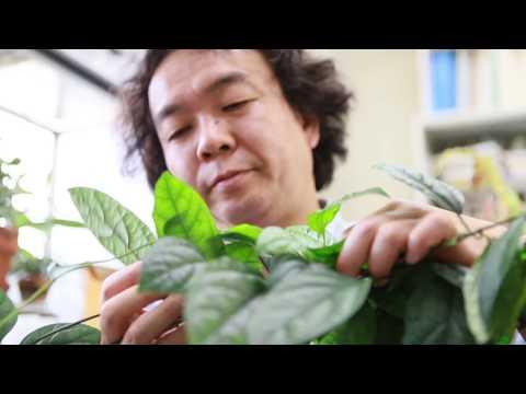 山形大学】研究紹介2017:理学部(横山潤) - YouTube