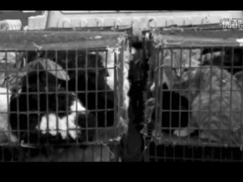 Chinese Animal Group Fighting Cat Meat & Fur Trade