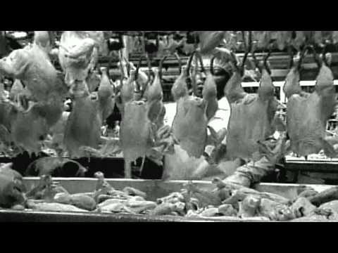 food inc documentary Food, inc 2008 documentary watch food, inc explores something which every  human needs to live: food most of us probably do not even think about where.