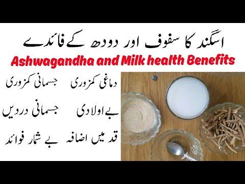 Download اسگند اور دودھ|| Ashwagandha and Milk Benefits||Aswagandha aor Doodh ke fayde||Hakeem Muhammad Naeem