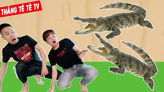 ThắnG Tê Tê Giải Cứu Anh Thịnh Thối Thoát Khỏi Con Cá Sấu