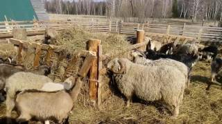 Кормушки для коз и овец