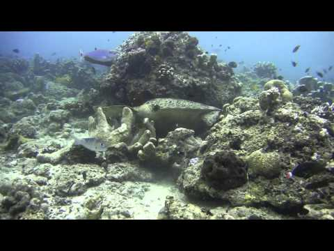 Malaysia islands of Mabul, Kapalai, Sipadan, Perenthian underwater (Sony DSC-TX7 with case MPK-THJ)