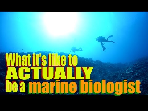 What it's like to ACTUALLY be a marine biologist | SciAll.or