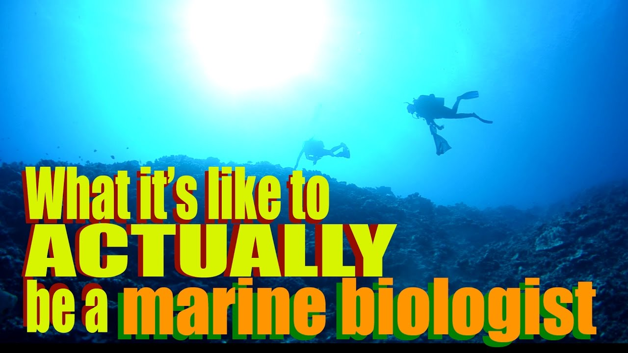 What Its Like To ACTUALLY Be A Marine Biologist