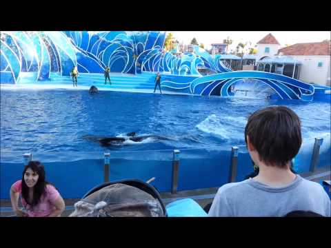 Caifornia Travel Destination Attraction  Visic Seaworld San Diego dolphin Show 2015