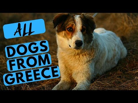 ALL Greek Dog Breeds List