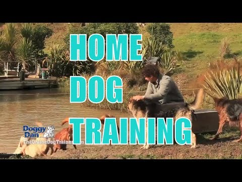 Online Dog Training - In Home Dog Training and Puppy Training