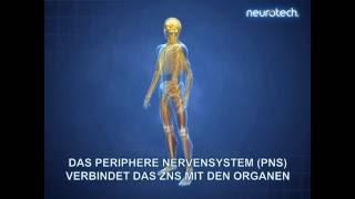 Grundlagen 1: Das Nervensystem ZNS PNS (neurotech)