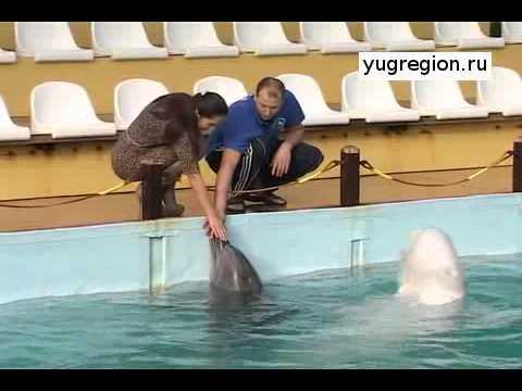 В Ростовском дельфинарии родился дельфиненок