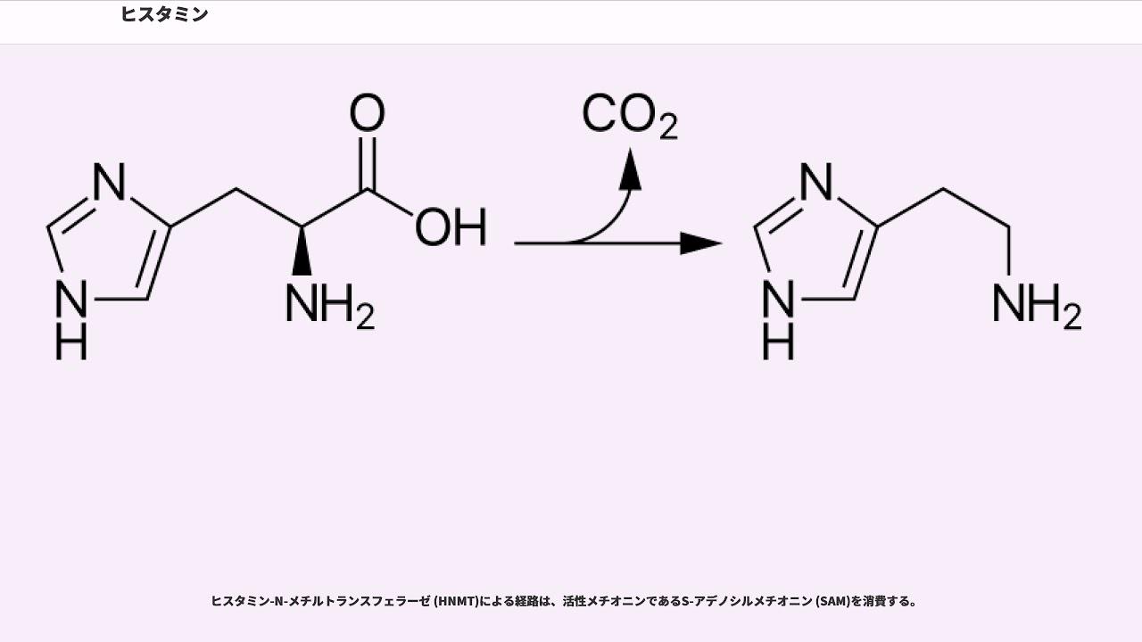 ヒスタミン ヒスチジン