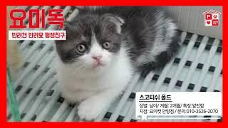 안양고양이분양 얌전얌전한 냥이