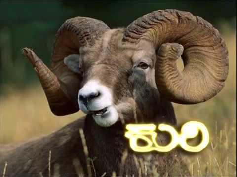 Sheep Farming (Kannada)