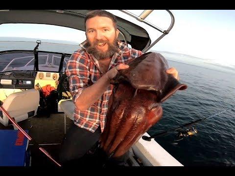 Huge Cuttlefish And Dhufish On Plastics, Bunbury, Western Australia.