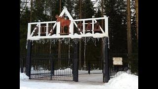 видео Зоосад в Вотчине Деда Мороза