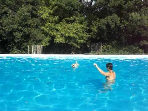 Cane in Vacanza Piscina Agriturismo Tana dei Lupi