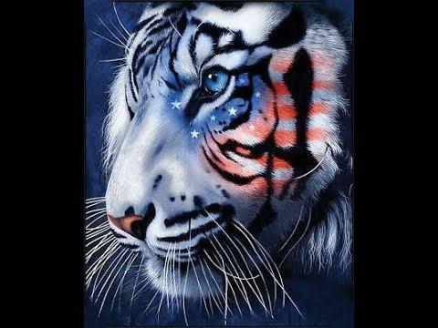 Corona@USA Tiger