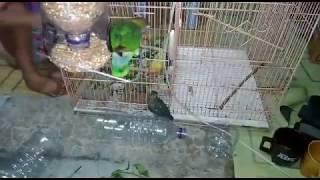TEMPAT PAKAN BURUNG dari botol air mineral