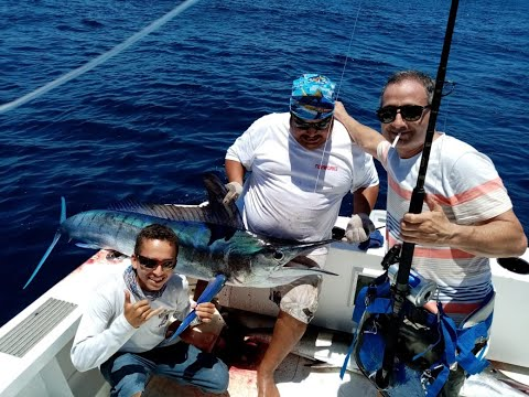 Puerto Vallarta Fishing Report May 2020 Marlin Sailfish And Tuna / Reporte De Pesca