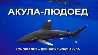 На подводной охоте встреча с акулой Лонгиманус