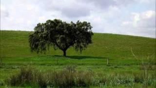 Verdes são os campos, José Afonso