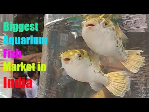 Biggest Aquarium Fish Market In India Part 1 Youtube