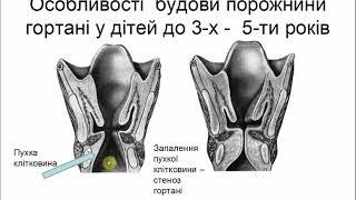 Анатомія нижніх дихальних шляхів