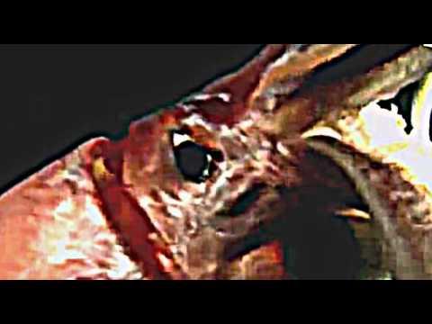 Documentaire | Cachalot Contre Calamar Géant | SD